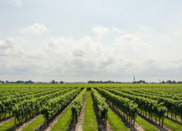 How Artificial Intelligence Can Enhance The Agriculture Industry Around The World